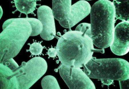 vilka organ ingår i immunförsvaret