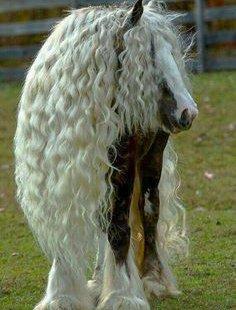 Weet Jij Alles Van Paarden Quiz Me