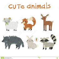 witch animal are you