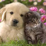 Who's cuter kittens or puppies?