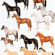 färger på hästar