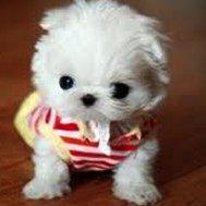 are u cute